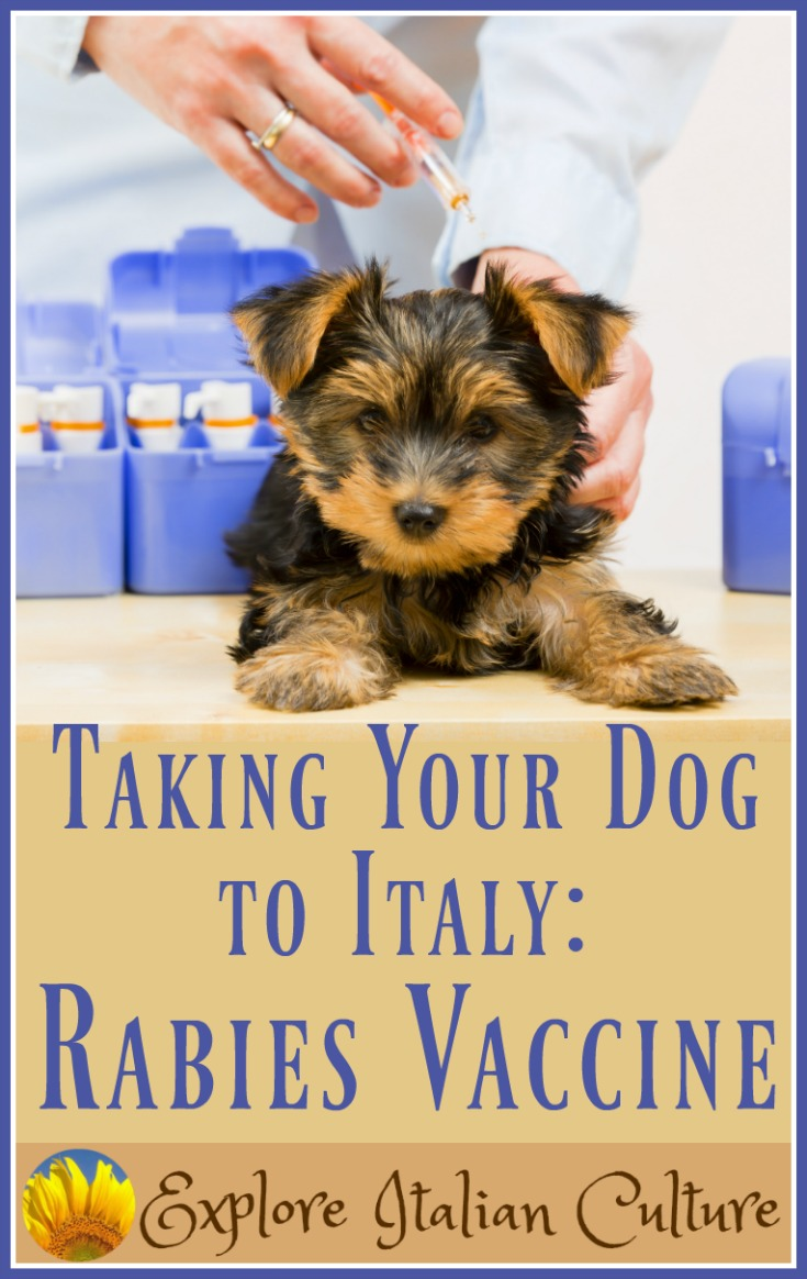 The canine rabies vaccine: regulations for travelling to Italy.