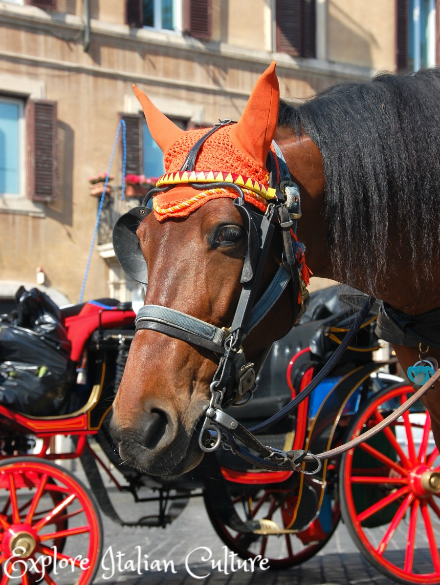 Tourist horses in Rome have to wear ear protectors during the summer months.