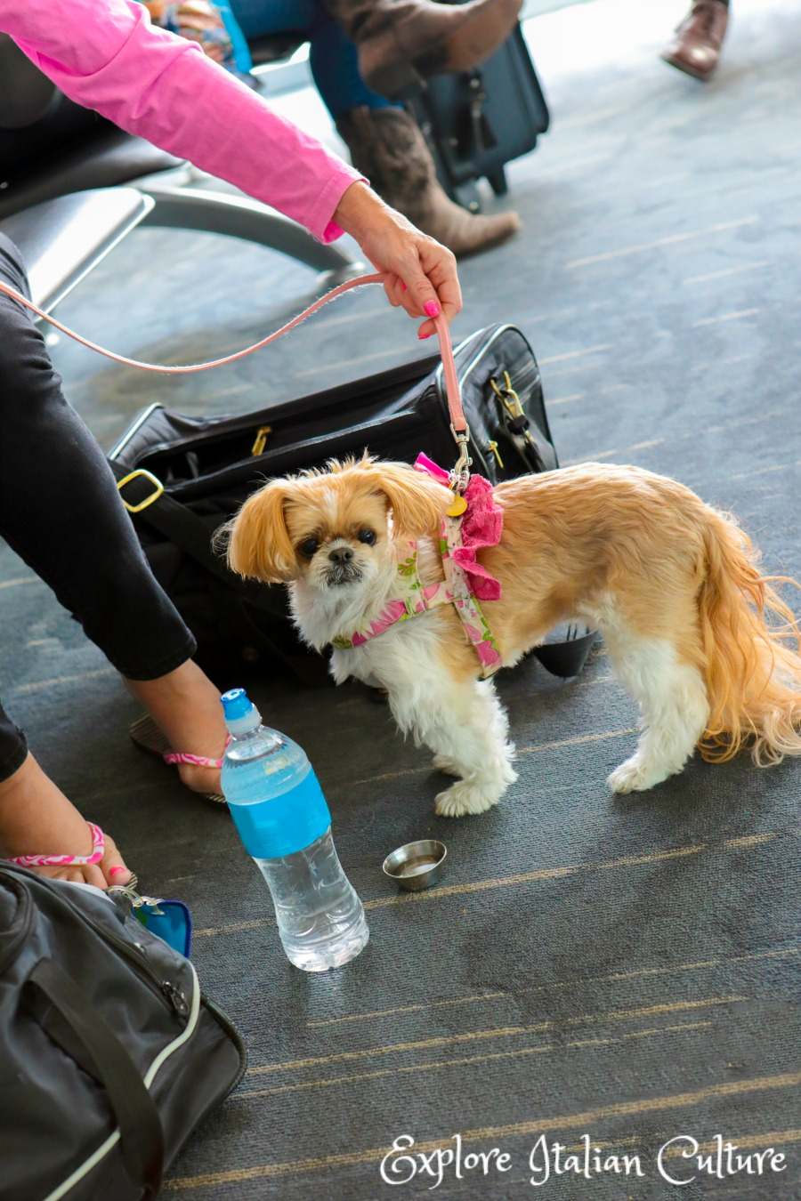 Your dog should be able to stay outside her crate until your flight is ready to board.
