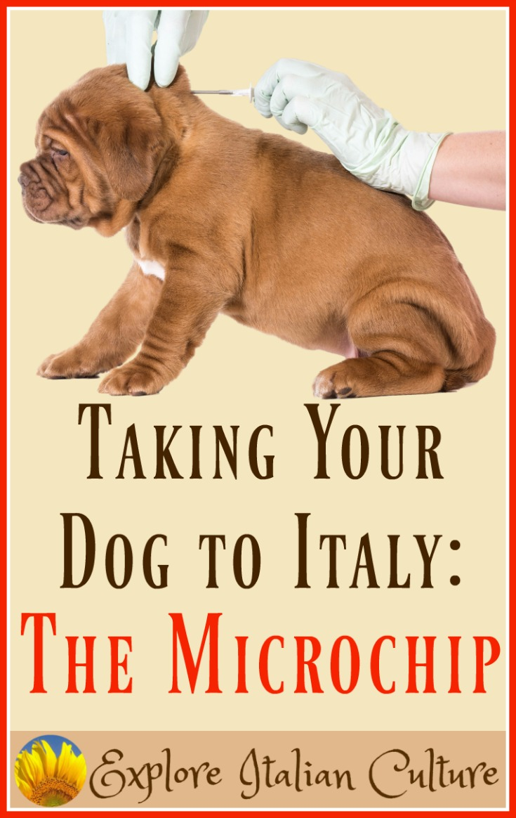 Puppy being microchipped.