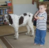 Best family dog