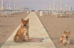 best italian beaches rimini