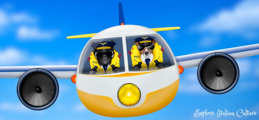 Dog airline travel: can a pet fly in the cabin?
