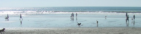 Dog friendly beaches in Italy