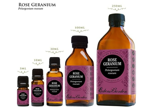 Rose geranium essential oil: use it as a tick repellent for dogs, cats and humans!