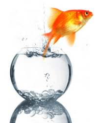 Goldfish bowl escape