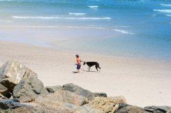 greyhound on dog friendly beach italy
