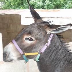 Dominick the Donkey sings along!