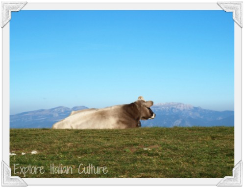 Free range cattle are used in Mediterranean diets
