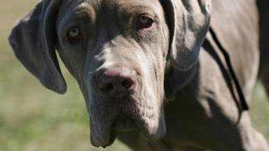 Italian dog names : top ten for male dogs, including meanings