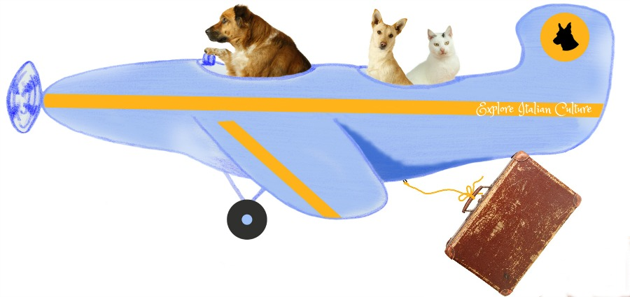 Taking your pets by plane: make sure the carrier accepts animals before you book.