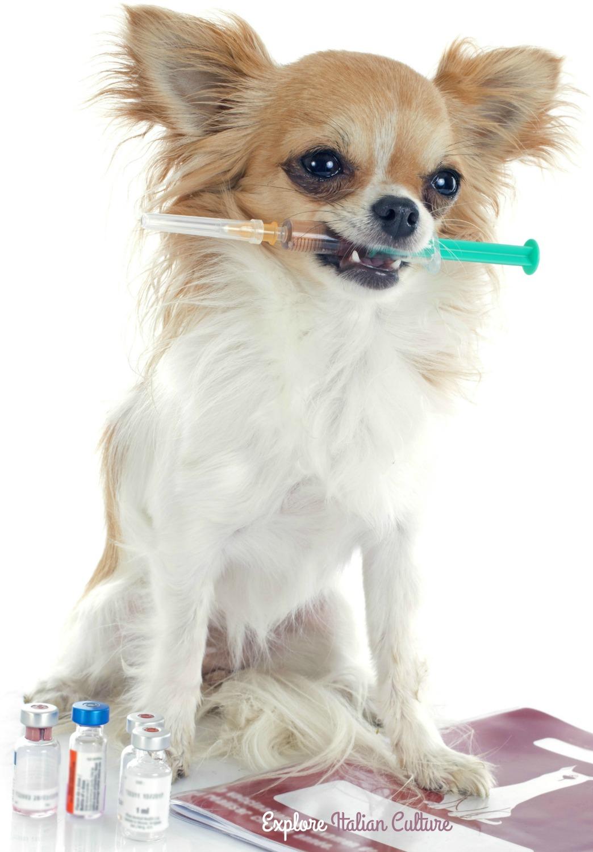 Dog holding inoculation needle.