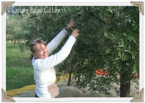 Cath picking olives