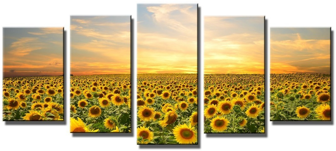 Sunflowers field picture.
