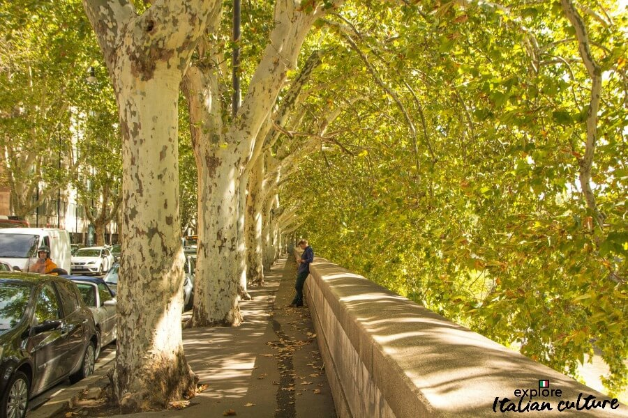 An arcade of trees by the River Tiber, Rome, in autumn.