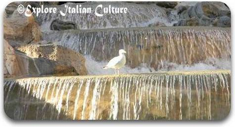 Seagull at the Trevi Fountain, Rome