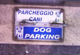 Animals in Italy parking