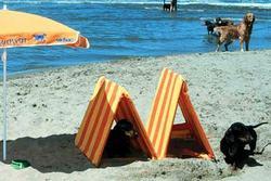Bau dog friendly beach