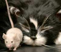 animals in italy