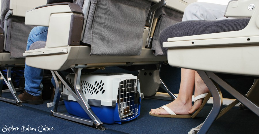 Dog travel in a plane's cabin. The crate must fit underneath the seat in front of you.