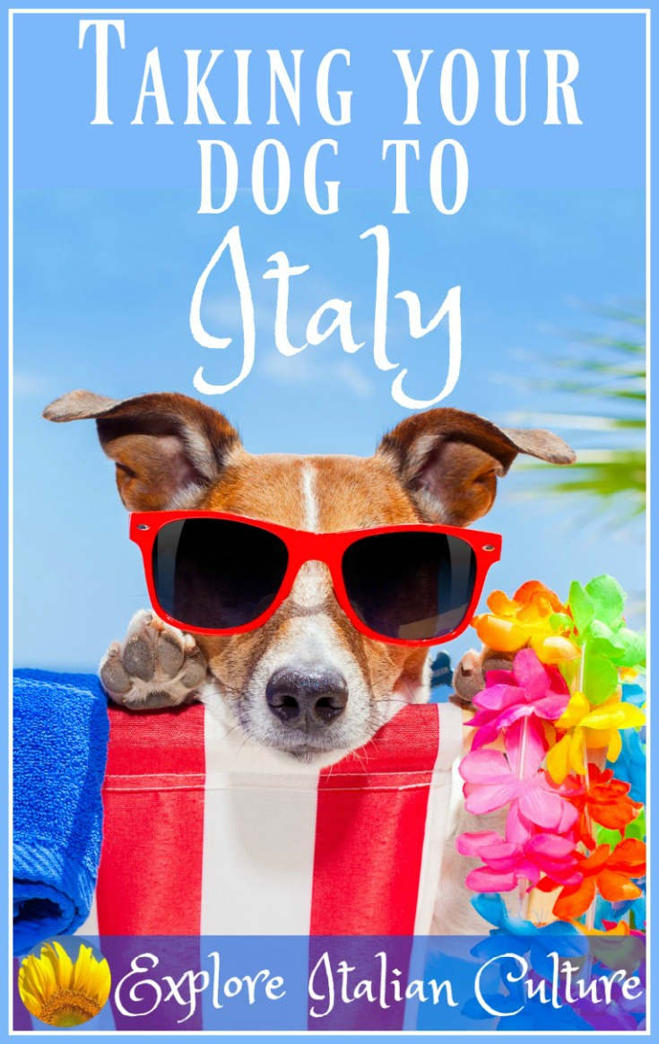 Taking your dog or cat to Italy - all you need to know.