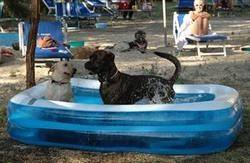 animals in Italy keeping cool-2