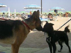 Italy beach Veneto