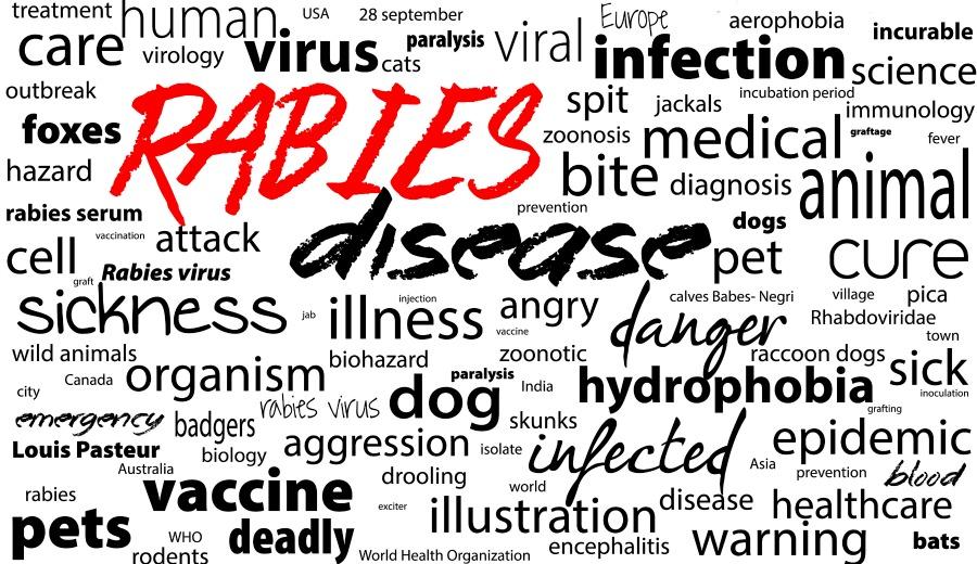 Rabies word cloud.