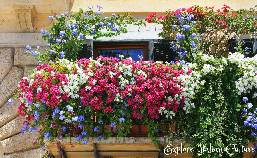 Rome in summer: the weather is hot, and riots of colourful flowers tumble from balconies if you take the time to look upwards.