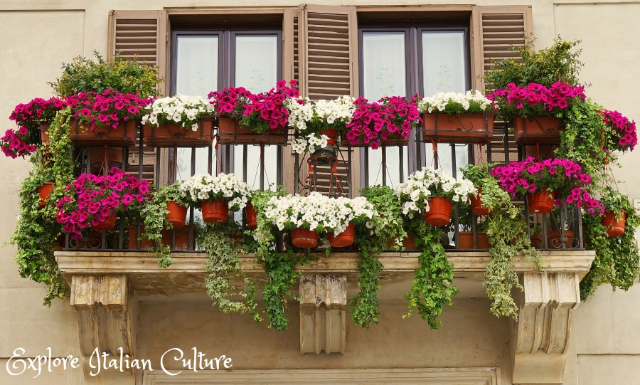 Flowers cascade from a balcony in the Piazza Navona, Rome.